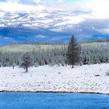 Yellowstone National Park In Winter, Wyoming Art Print
