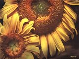 Floral Beauty I Art Print