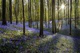 Fairytale Forest Sunlight 2 Art Print
