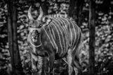The Deer II - Black & White Art Print