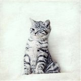 Cat Winks Art Print