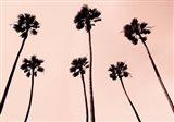 Palm Trees 1997 Copper Art Print