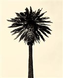 Palm Tree 1979 Tan Art Print