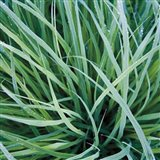 Grass with Morning Dew Art Print