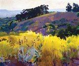 Late Sun, Eucalyptus on the Ridge Art Print
