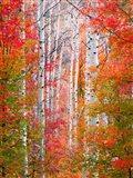 Autumn Passage Art Print