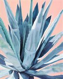 Agave with Coral Art Print