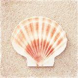 Scallop Shell Art Print