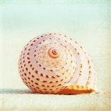 Seashell Voices Art Print