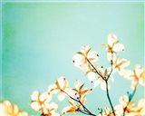 Blossoms Adrift Art Print
