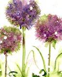 Alliums Art Print