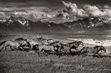Mountain Range Mavericks Art Print