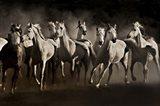 Dream Horses Art Print