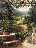 Chianti Vineyard Art Print