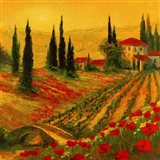 Poppies of Toscano I Art Print
