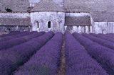 Lavender Abbey Art Print