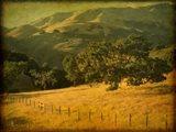 Oak and Fence Art Print