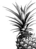 Pineapple (BW) Art Print