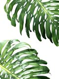 Double Philodendron (color) Art Print