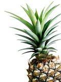 Pineapple (color) Art Print