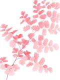 Pink Maidenhair Art Print