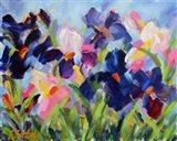 The Iris Show Art Print