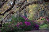 Oaks and Azaleas Art Print