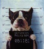 Mug Shot Art Print