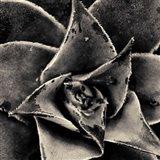 Seattle Succulents Art Print