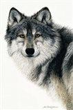 Silent Watch Art Print