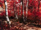 Red Trees Path Art Print