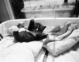 Kitten Laundry Art Print