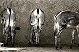 Zebra Butts Art Print