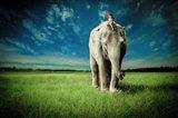 Elephant Carry Me Art Print