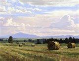 Fresh Cut Hay Art Print