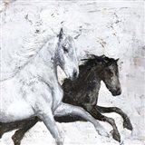 Wild Horse 2 Art Print