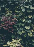 Plant Wall Art Print