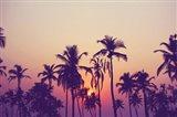 Palm Sky 1 Art Print