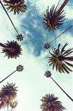 Palm Sky 2 Art Print