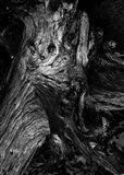 Black Wood Art Print