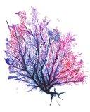 Sea Fan - Purple Art Print