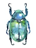 Chromatic Blue Beetle Art Print