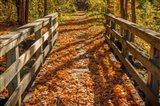 Fall On The Footbridge Art Print