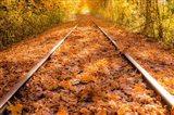 Train Tracks in The Fall Art Print
