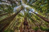 Avatar Grove Canopy Art Print