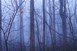 Red Cardinal in a Blue Forest Art Print