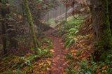 Forest Stroll Art Print
