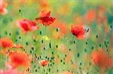 United Colors of Summer Art Print