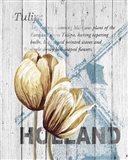 Holland Tulips Art Print