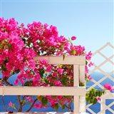 Santorini Blooms Art Print